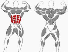 Gesamte Bauchmuskulatur