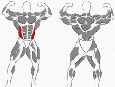 Schräger Bauchmuskel